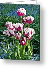 Tulips Among The Forget Me Nots Greeting Card