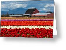 Tulips And Barn Greeting Card