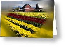 Tulips And Barn Greeting Card