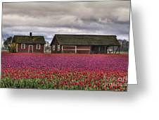 Tulips And Barns Greeting Card