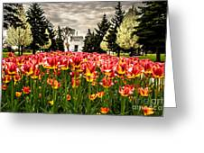 Tulips And Building Greeting Card