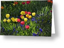 Tulips And Grape Hyacinths Greeting Card