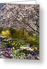 Tulips And Other Spring Flowers At Dallas Arboretum Greeting Card