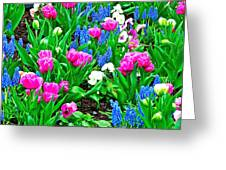 Tulips And Pansies And Grape Hyacinth By Lutheran Cathedral Of Helsinki-finland Greeting Card