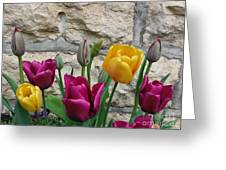 Tulips And Stone Greeting Card