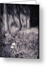 Tulips And Tree Shadow Greeting Card