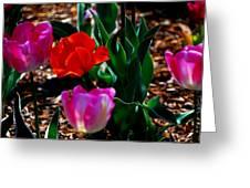 Tulips. Arlington Cemetery Greeting Card