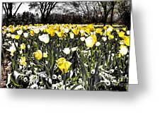Tulips At Dallas Arboretum V26 Greeting Card