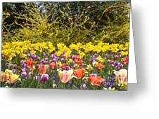 Tulips At Dallas Arboretum V32 Greeting Card