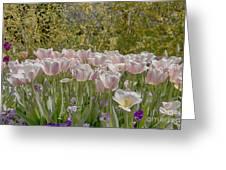 Tulips At Dallas Arboretum V45 Greeting Card