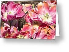 Tulips At Dallas Arboretum V58 Greeting Card