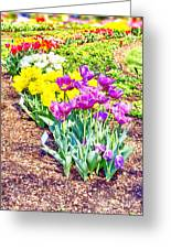 Tulips At Dallas Arboretum V65 Greeting Card