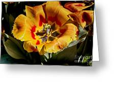 Tulips At Dallas Arboretum V67 Greeting Card