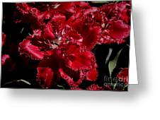 Tulips At Dallas Arboretum V74 Greeting Card