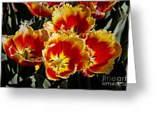 Tulips At Dallas Arboretum V84 Greeting Card