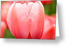 Tulips At Thanksgiving Point - 19 Greeting Card