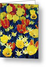 Tulips Blue Greeting Card