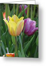 Tulips - Caring Thoughts 03 Greeting Card
