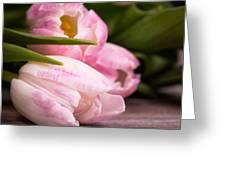 Tulips Closeup Greeting Card
