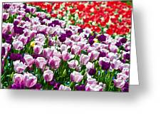 Tulips Field Greeting Card