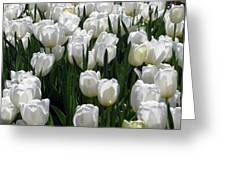 Tulips - Field With Love 19 Greeting Card