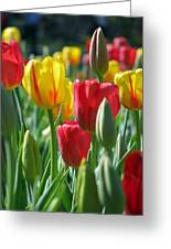 Tulips - Field With Love 22 Greeting Card
