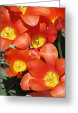Tulips - Field With Love 25 Greeting Card