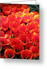 Tulips - Field With Love 28 Greeting Card