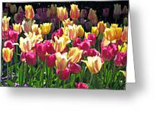 Tulips - Field With Love 35 Greeting Card