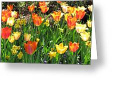 Tulips - Field With Love 41 Greeting Card