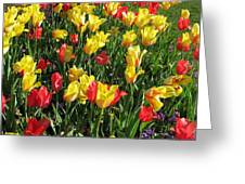Tulips - Field With Love 49 Greeting Card