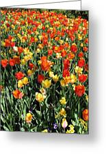 Tulips - Field With Love 50 Greeting Card