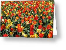Tulips - Field With Love 51 Greeting Card