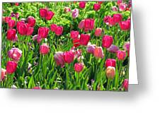 Tulips - Field With Love 54 Greeting Card