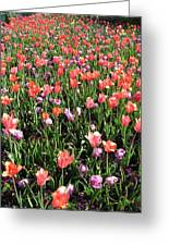 Tulips - Field With Love 55 Greeting Card