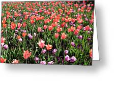 Tulips - Field With Love 56 Greeting Card