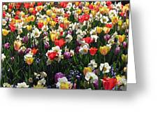 Tulips - Field With Love 57 Greeting Card