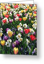 Tulips - Field With Love 58 Greeting Card