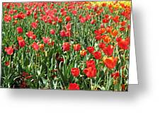 Tulips - Field With Love 61 Greeting Card