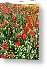 Tulips - Field With Love 62 Greeting Card