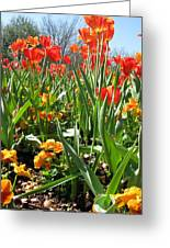 Tulips - Field With Love 64 Greeting Card