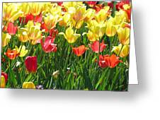 Tulips - Field With Love 65 Greeting Card