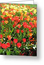 Tulips - Field With Love 68 Greeting Card
