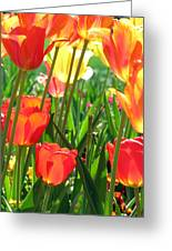 Tulips - Field With Love 69 Greeting Card