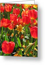 Tulips - Field With Love 71 Greeting Card