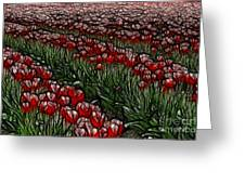 Tulips Fields Are Forever Greeting Card