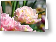 Tulips Flowers Garden Art Prints Pink Tulip Floral Greeting Card