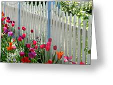 Tulips Garden Along White Picket Fence Greeting Card