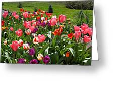 Tulips Garden Art Prints Colorful Spring Floral Greeting Card