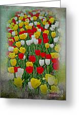 Tulips In A Field Greeting Card